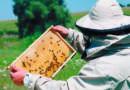 Создан союз пчеловодов района